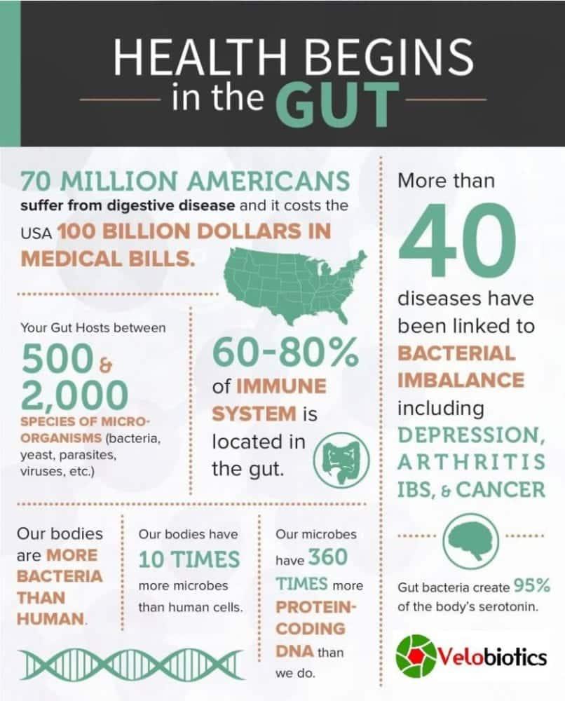 health-gut-probiotics-digestive-system-velobiotics